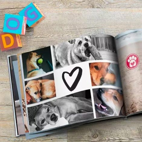 A pawsitively perfect photo book