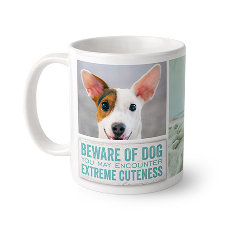 Beware Cute Dog