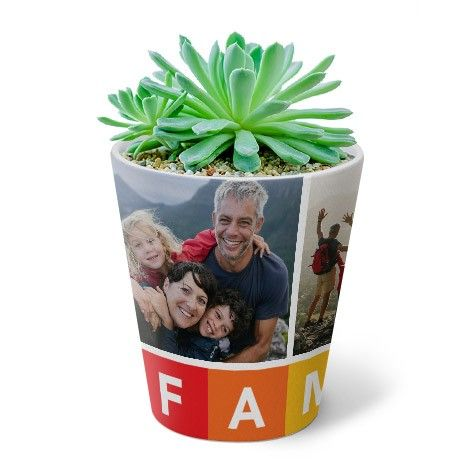 Plant Pot Image